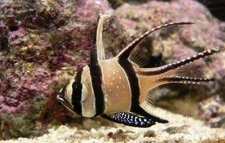 Aquarium Of Sea Fisheries Institute Image