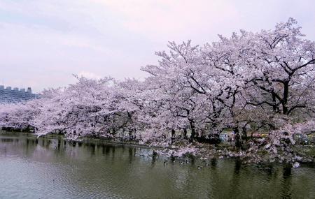 Ueno Park Image