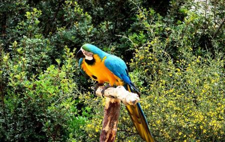 Pafos Zoo, Paphos