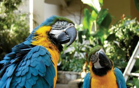 Bird Kingdom Image
