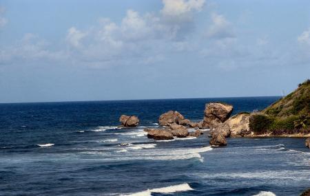 Bathsheba Beach Image