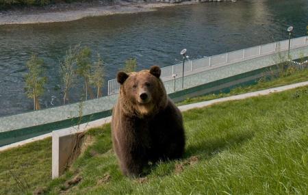 Bear Park, Bern
