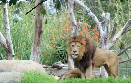 Perth Zoo, Perth