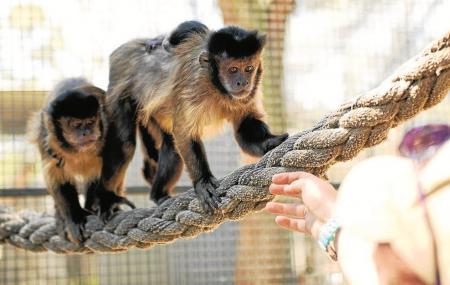 Hunter Valley Zoo Image
