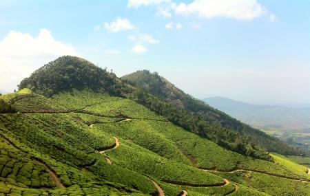 Tea Garden Image