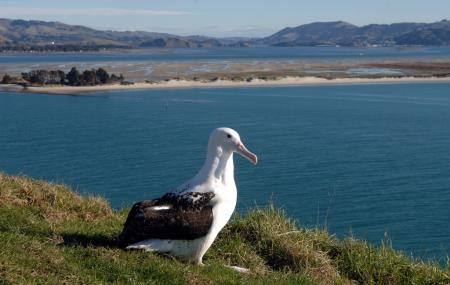 The Royal Albatross Centre, Dunedin