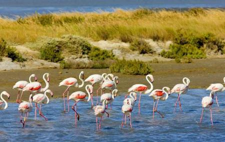 Camargue Nature Park, Arles