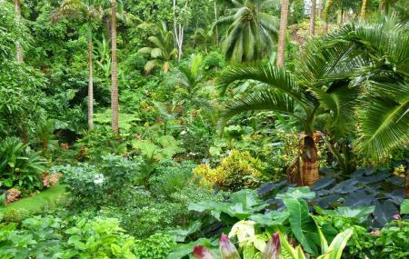Hunte's Garden, Bathsheba