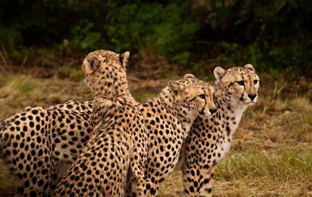 De Wildt Cheetah And Wildlife Centre Image