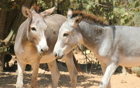 Donkey Sanctuary, Limassol
