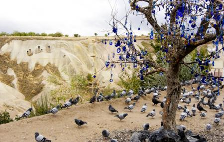 Pigeon Valley Image
