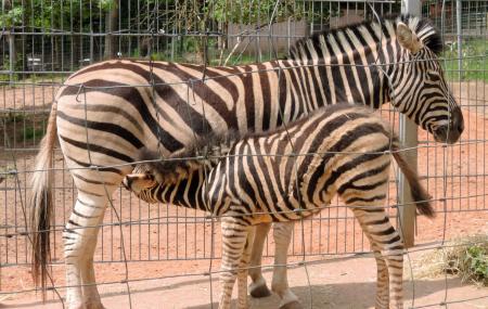 Zoo Kaiserslautern Image