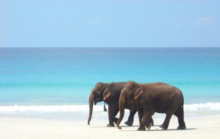 Elephant Beach, Havelock Island