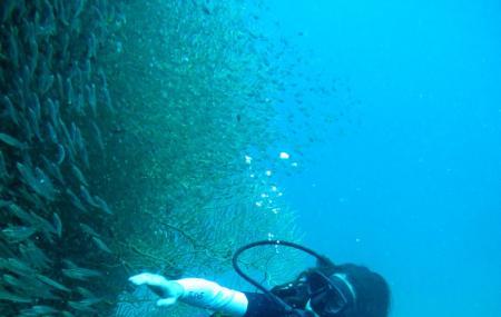 Phi Phi Diving Image