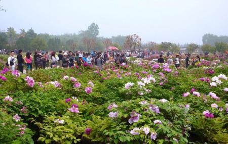 Luoyang International Peony Garden, Luoyang