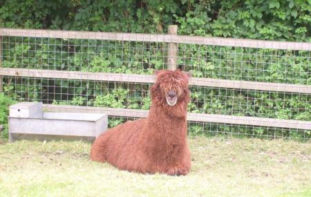 Hazlehead Pet Corner Image