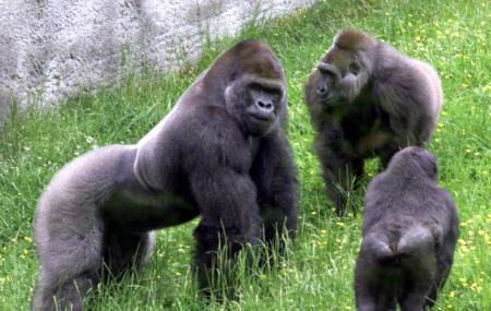 Belfast Zoo Image