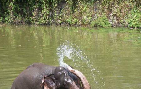 Elephant Junction, Thekkady