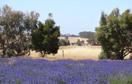 Emu Bay Lavender Farm, Kingscote
