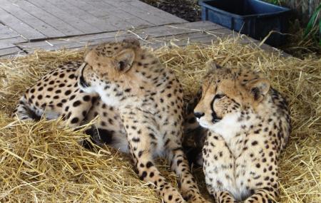 Cheetah Outreach, Stellenbosch