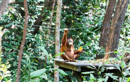 Shangri La's Orangutan Care Project Image