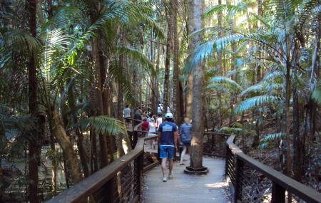 Central Station And Wanggoolba Creek, Fraser Island