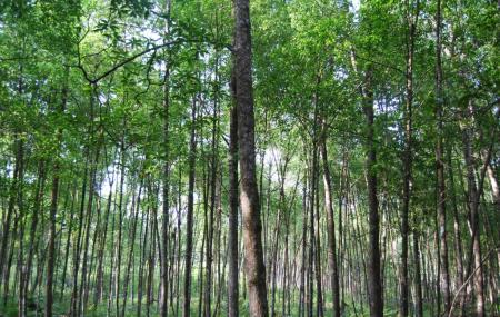 Matang Mangrove Forest Reserve, Taiping