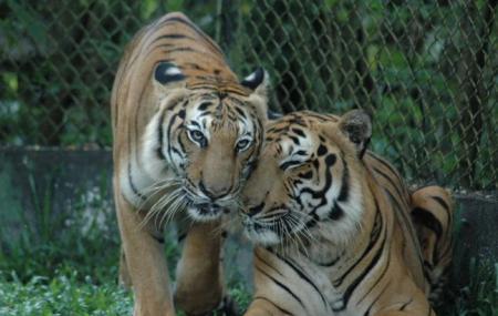 Zoo Taiping, Taiping