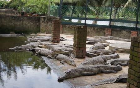 Crocodile Farm, Miri