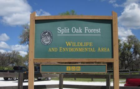 Split Oak Forest Image
