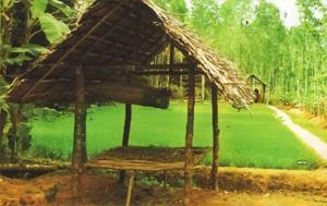 Kerala Farm Image