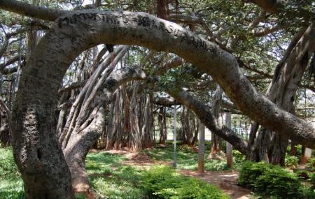 Dodda Aladha Mara Image