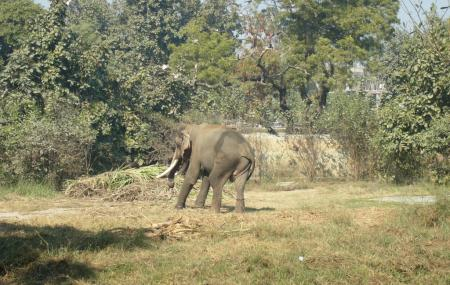 Lucknow Zoo, Lucknow