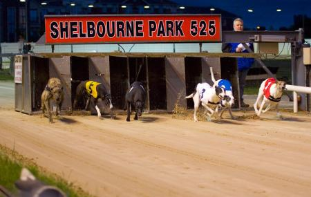 Shelbourne Park Greyhound Stadium Image