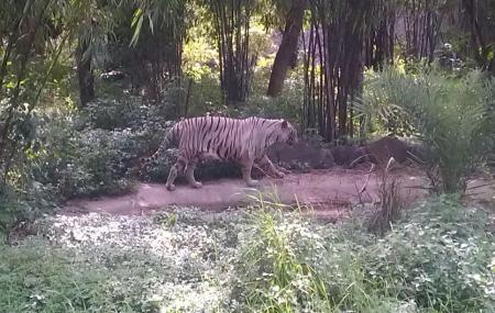 Rajiv Gandhi Zoological Park Image