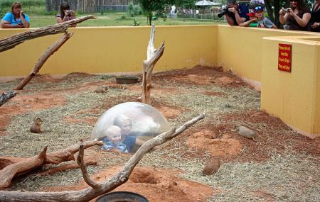 Reptile Gardens Image