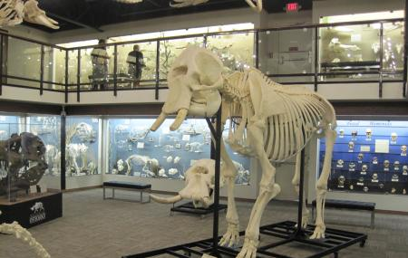 Museum Of Osteology Image