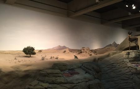 Sharjah Natural History Museum And Desert Park Image