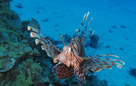 Sataya Reef, Marsa Alam