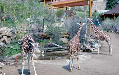 Cheyenne Mountain Zoo Image