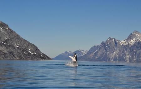 Whale Watching, Nuuk