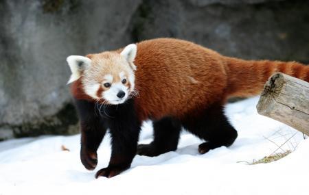 Syracuse Zoo Image