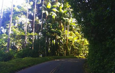 Pepeekeo Scenic Drive, Hilo