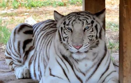 Zoological Wildlife Foundation Image