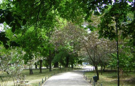 Cismigiu Gardens Image