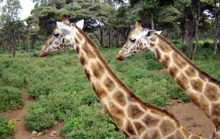 Giraffe Center Image