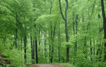 Vienna Woods, Vienna