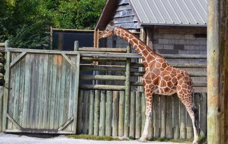 Knoxville Zoo Image