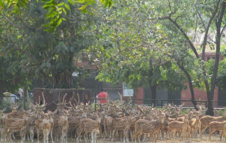 Jaipur Zoo, Jaipur