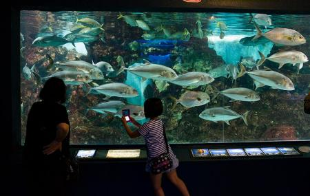 Teradomari Aquarium, Nagaoka